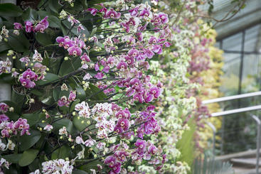 Kew Gardens, London, 2017, Orchids, Museums,, Going Out London