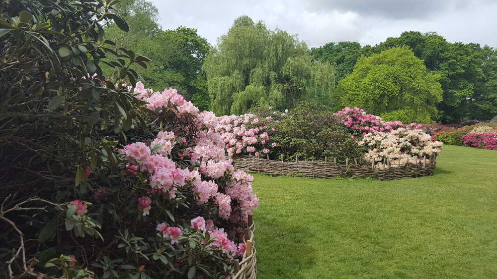 London events April 2018, What's on in London April, London in April, Isabella Plantation, Richmond Park, London parks