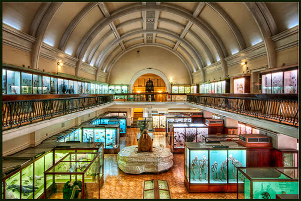 Kids this Christmas in London, Christmas in London, family things to do in London this Christmas, Horniman sleepover